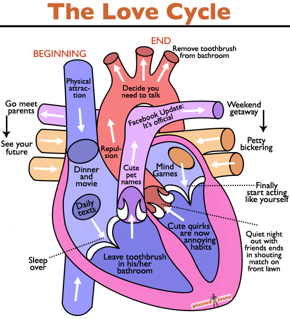 the-love-cycle